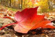 الأرصاد توجه نصائح للمواطنين بسبب طقس الخريف .. تعرف عليها